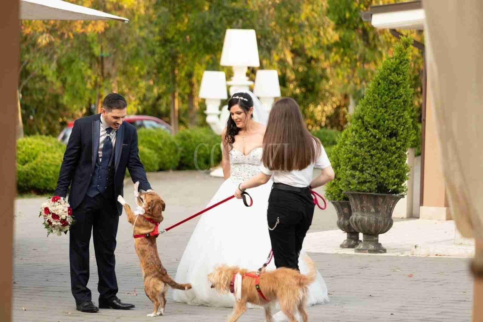Matrimonio a 4 Zampe